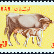 LEBANON - CIRCA 1965: A stamp printed in Lebanon shows Cow and calf, circa 1965. — Stock Photo #49279789