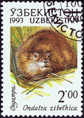 "UZBEKISTAN - CIRCA 1993: A stamp printed in Uzbekistan from the ""Animals "" issue shows a Muskrat (Ondatra zibethicus), circa 1993. — Stock Photo"