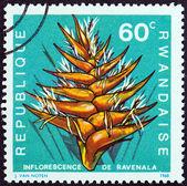 およそ 1968年 - ルワンダ: ルワンダの「花」の問題から印刷スタンプ ravenala ナルトサワギク、およそ 1968年を示しています. — ストック写真