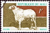 """MALI - CIRCA 1969: A stamp printed in Mali from the """"Domestic animals """" issue shows a sheep, circa 1969. — Stock Photo"""