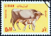 LEBANON - CIRCA 1965: A stamp printed in Lebanon shows Cow and calf, circa 1965. — Foto de Stock