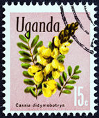 "UGANDA - CIRCA 1969: A stamp printed in Uganda from the ""Flowers "" issue shows Cassia didymobotrya, circa 1969. — Stock Photo"