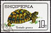 "ALBANIA - CIRCA 1966: A stamp printed in Albania from the ""Reptiles "" issue shows Greek Tortoise (Testudo graeca), circa 1966. — Stock Photo"