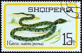 アルバニア - 年頃 1966年:「爬虫類」問題からアルバニアの印刷スタンプ年頃 1966年グラスは、ヘビ (鳥類鳥類 persa) を示しています. — ストック写真