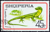 "ALBANIA - CIRCA 1966: A stamp printed in Albania from the ""Reptiles "" issue shows European Green Lizard (Lacerta viridis), circa 1966. — Stock Photo"