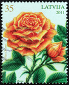 """LATVIA - CIRCA 2011: A stamp printed in Latvia from the """"Flowers - Painting by Lilija Dinere """" issue shows Rose, circa 2011. — Stok fotoğraf"""