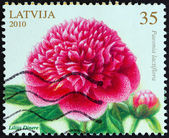 """LATVIA - CIRCA 2010: A stamp printed in Latvia from the """"Flowers - Painting by Lilija Dinere """" issue shows Peony, circa 2010. — Stock Photo"""