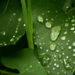 Raindrops — Stock Photo #12703501