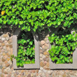 Twine green plants on a stone house — Stock Photo
