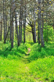 Footpath in a sunny forest — Stock Photo