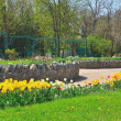 Tulips in city park — Stock Photo