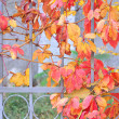 Autumn leaves on an iron fence — Stock Photo