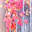 Stock Photo: Autumn leaves and wild berries
