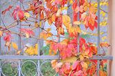 Autumn leaves on an iron fence — Stock Photo