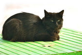 Black cat sitting on a bench in the street and looking at us — Stock Photo