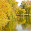 Autumn park with a lake — Stock Photo