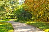 Ruta en el parque otoño — Foto de Stock