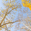 Branch with yellow leaves against the sky — Stock Photo