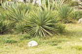 Tropical plants on the lawn — Stock Photo