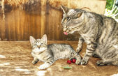 Chat gris avec un chaton gris dans l'yard — 图库照片