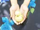 Manzanas en las manos — Foto de Stock