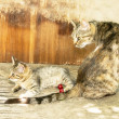 Watchful mother cat and kitten on an old wooden table — Stock Photo #50734129