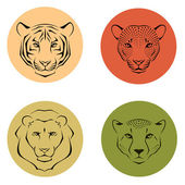 Illustrations of felines - tiger, lion, leopard and cheetah — Stock Vector