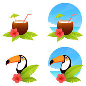 Colorful tropical summer illustrations with a coconut drink and toucan bird — Stock Vector