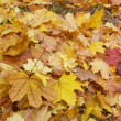 Autumn, leaves — Stock Photo