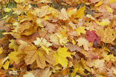 Autumn, leaves — Stockfoto