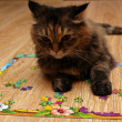 Cat playing puzzle lying on the floor — Stock Photo