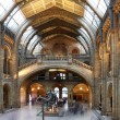 Natural History Museum in London, England — Stock Photo