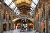 Natural History Museum in London, England — ストック写真