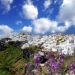 Santorini in spring time with flowers, Fira Town, Greece — Stock Photo #16790399