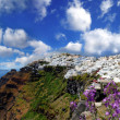 Santorini in spring time with flowers, Fira Town, Greece — Stock Photo #16793077