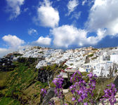 Santorini in spring time with flowers, Fira Town, Greece — Stock Photo