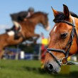 Horses races — Stock Photo