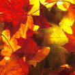 Beautiful background from maple leaves — Stock Photo