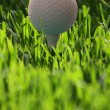 Golf ball on tee in fresh grass — 图库照片