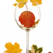 Wine glass with autumn leaves — Stock Photo #16943203