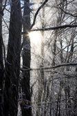 Paisagem de inverno de bonito — Foto Stock