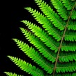 Fern leaf — Stock Photo #17153287