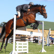 Horses races, show jumping - Stock Photo