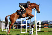Horses races, show jumping — Stock Photo