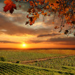 Chianti vineyard landscape in Tuscany, Italy — Stock Photo #30487011