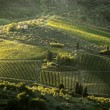 Famous Tuscany vineyards near the Florence in Italy — Foto Stock