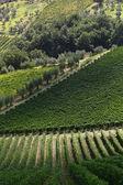 Beroemde Tuscany wijngaarden in de buurt van de Florence in Italië — Stockfoto