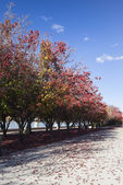 Autumn colours. Embankment of Burley Griffin Lake near National  — Stock Photo