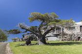 Huge trees and country house Bingie (near Morua) . NSW. Australi — Stock Photo