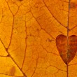 Heart of the autumn leaves — Stock Photo